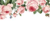 Mão-extraídas quadro de rosas cor de rosa no vetor de fundo branco