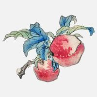 Peaches by K?no Bairei (1844-1895). Digitally enhanced from our own original 1913 edition of Bairei Gakan.
