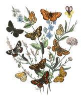 Ilustração, de, borboletas, ligado, flores