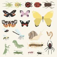 Vector of different kinds of insects