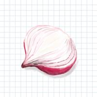 Hand drawn onion watercolor style