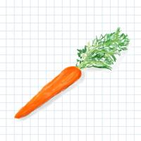 Hand drawn carrot watercolor style