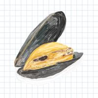 Hand drawn mussel watercolor style