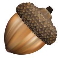 Illustration of walnut isolated on white background vector