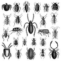 Illustration set of various insects
