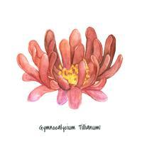 Dibujado a mano cactus gymnocalycium tillianum