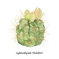 Hand getrokken gymnocalycium neuhuberi cactus