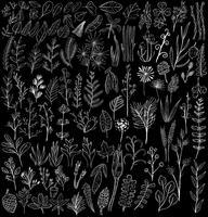 Ilustração de vários tipos de plantas