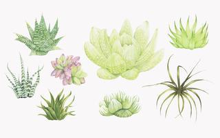 Handdragen haworthia växter isolerad på vit bakgrund
