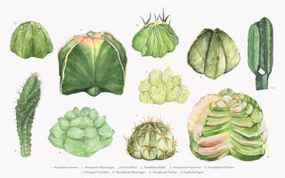 Hand getekend astrophytum cactus collectie