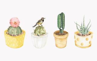 Plantas de cactus dibujadas a mano.