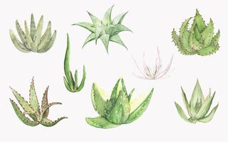 Collection of hand drawn aloe plants