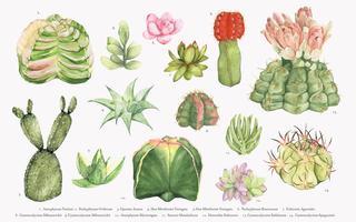 Colección de cactus dibujados a mano.