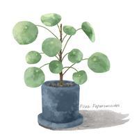 Planta de Pilea Peperomioides aislada en el fondo whtie
