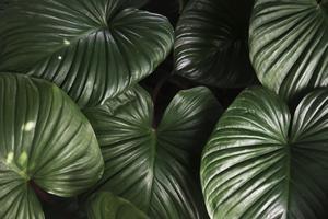 Primo piano della priorità bassa verde del foglio