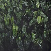 Närbild på grön blad bakgrund
