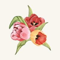 Hand drawn tulip flower isolated