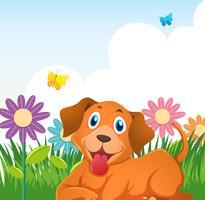 Cão bonito no jardim de flores