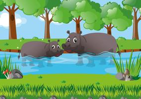 Two hippo in the river