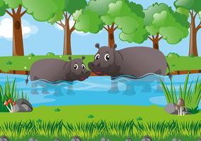 Två flodhästar i floden