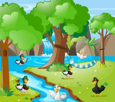 Many ducks in the forest