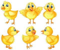 Six cute chicks on white background