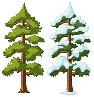 Two pine trees with and without snow
