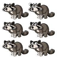 Raccoon with different expressions