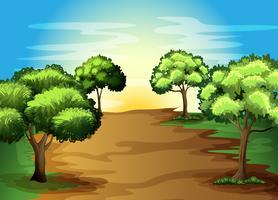 Växande gröna träd i skogen