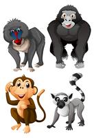 Four types of monkeys on white background