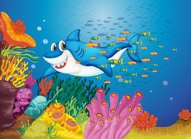 pesce squalo
