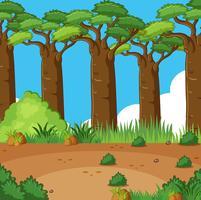 Scena di sfondo con molti alberi nel campo
