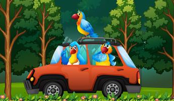 A group parrot on the car