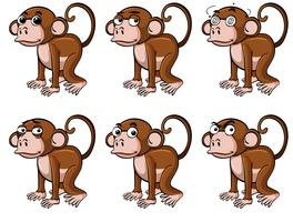 Monkey with different emotions