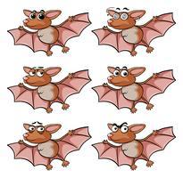 Murciélago con diferentes expresiones faciales.