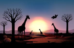 Escena de fondo con jirafa silueta en el campo