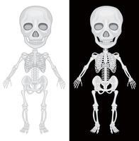 Skelett på svart och vit bakgrund