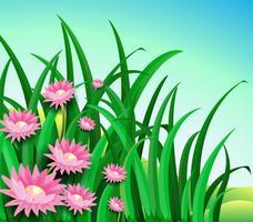 En trädgård med tusensköna blommor