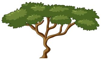 Tree with green leaves vector