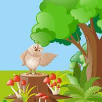 Chouette debout sur une souche en forêt