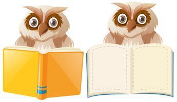 Duas corujas com modelos de livro