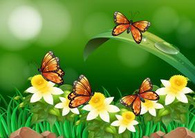 Schmetterlinge fliegen in den Garten