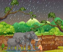 Escena de zoológico con elefantes en día lluvioso