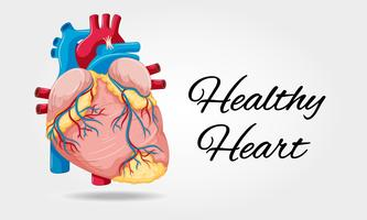 Healthy heart diagram on white background