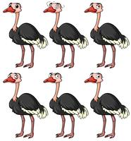 Ostrich with different facial expressions