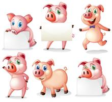 Pigs with empty signboards