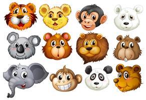 Têtes d'animaux