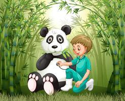 Médico veterinário e Panda na floresta de bambu