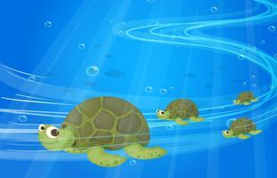 Tartarugas no fundo do mar
