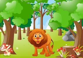 Wild lion in the forest